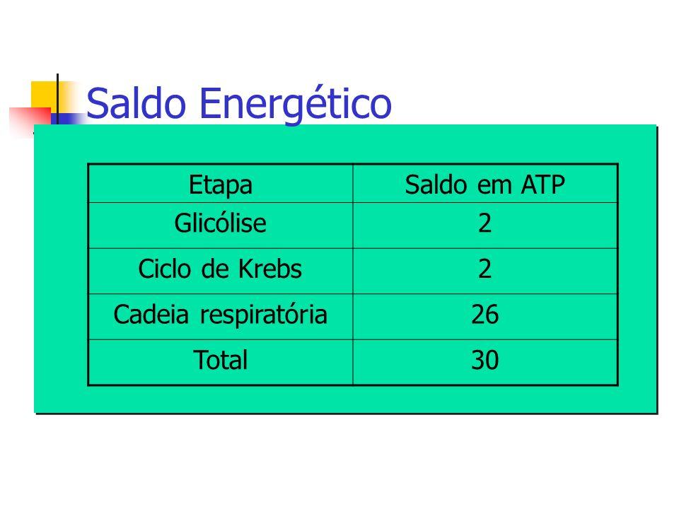 Saldo Energético EtapaSaldo em ATP Glicólise2 Ciclo de Krebs2 Cadeia respiratória26 Total30