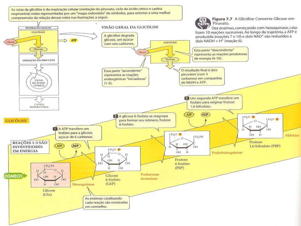 Testes 9.Os açúcares são produzidos na etapa bioquímica da fotossíntese.