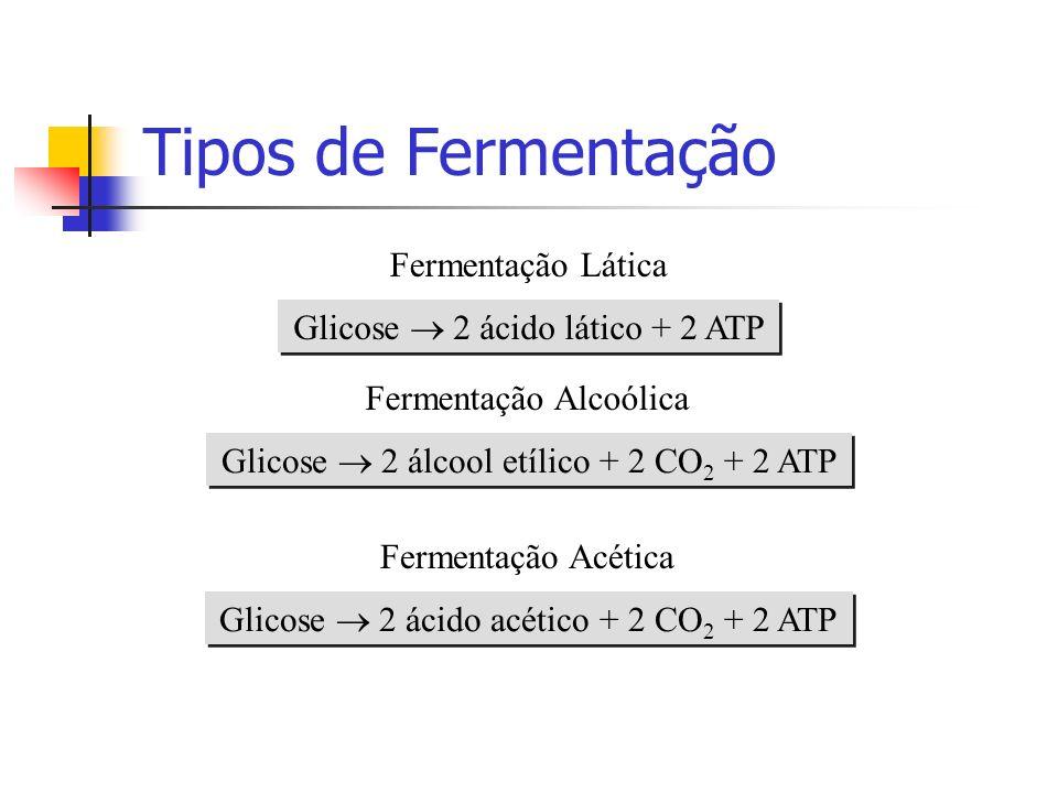 Tipos de Fermentação Glicose 2 ácido lático + 2 ATP Fermentação Lática Glicose 2 álcool etílico + 2 CO 2 + 2 ATP Fermentação Alcoólica Glicose 2 ácido