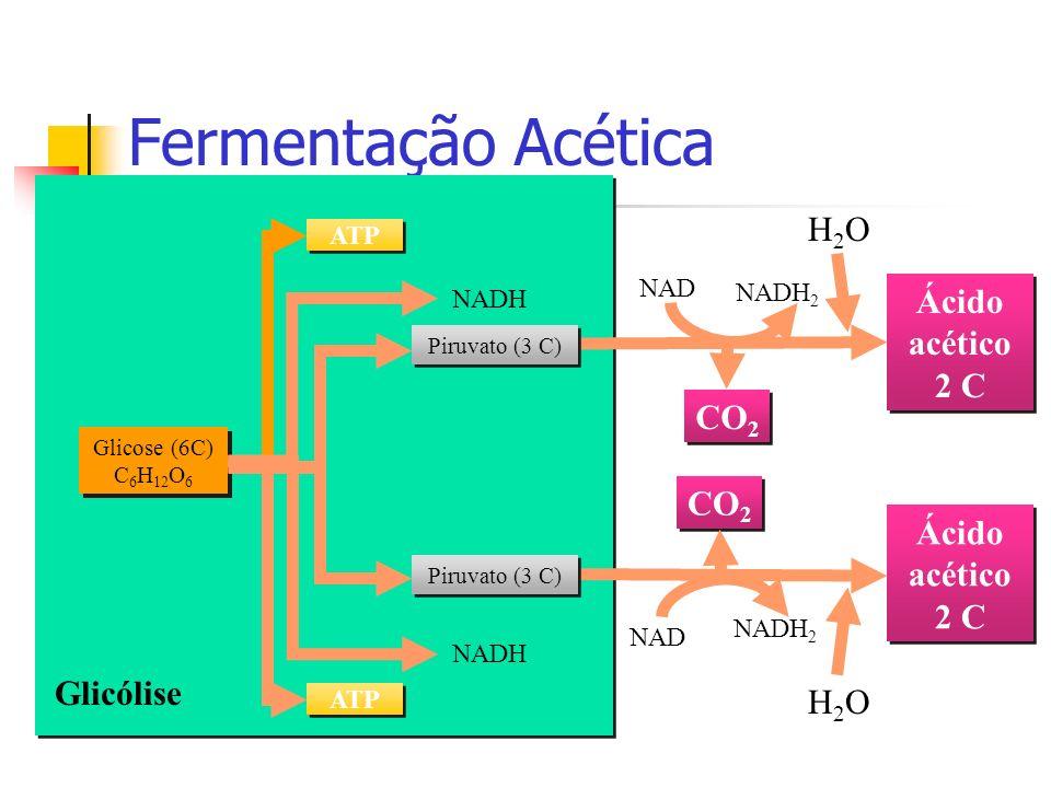 Fermentação Acética Glicólise Glicose (6C) C 6 H 12 O 6 ATP NADH Ácido acético 2 C CO 2 NAD NADH 2 H2OH2O Ácido acético 2 C CO 2 NAD NADH 2 H2OH2O Pir