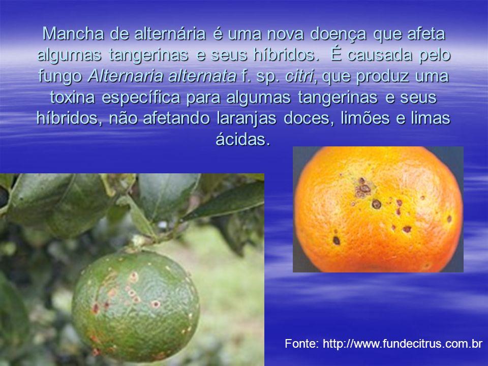 Mancha de alternária é uma nova doença que afeta algumas tangerinas e seus híbridos. É causada pelo fungo Alternaria alternata f. sp. citri, que produ