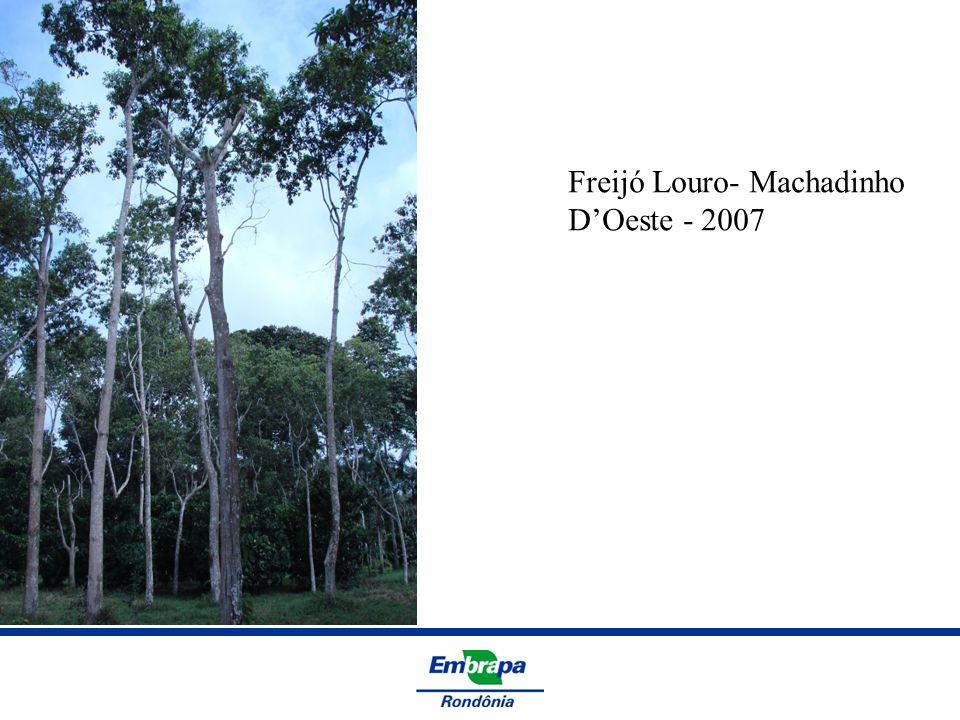 Freijó Louro- Machadinho DOeste - 2007