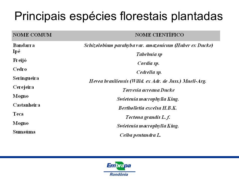 Principais espécies florestais plantadas