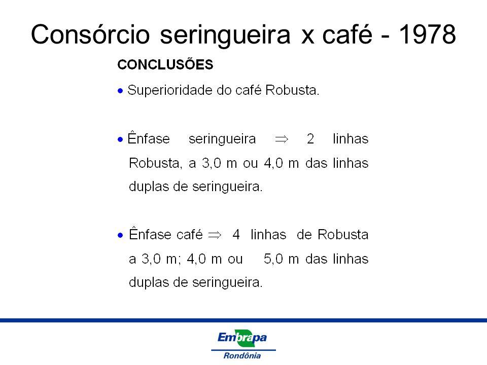 Consórcio seringueira x café - 1978