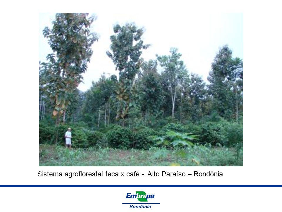 Sistema agroflorestal teca x café - Alto Paraíso – Rondônia