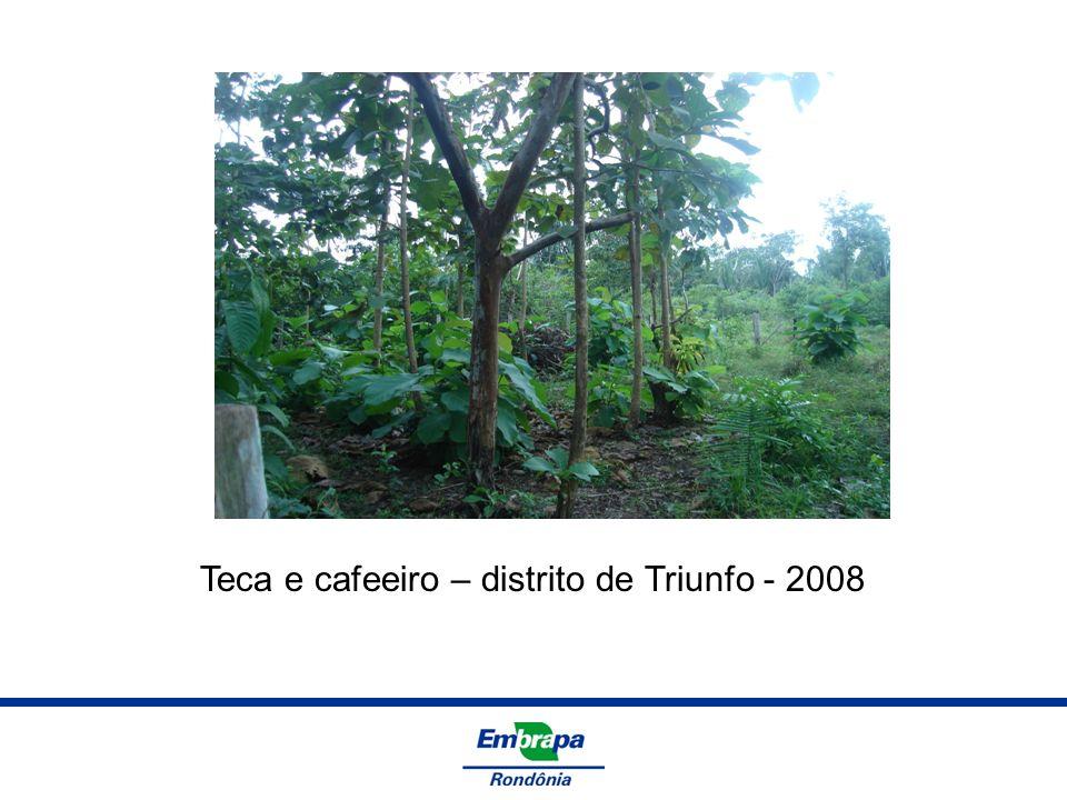 Teca e cafeeiro – distrito de Triunfo - 2008
