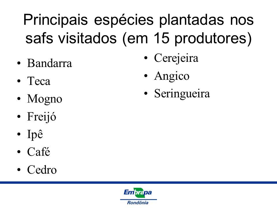 Principais espécies plantadas nos safs visitados (em 15 produtores) Bandarra Teca Mogno Freijó Ipê Café Cedro Cerejeira Angico Seringueira