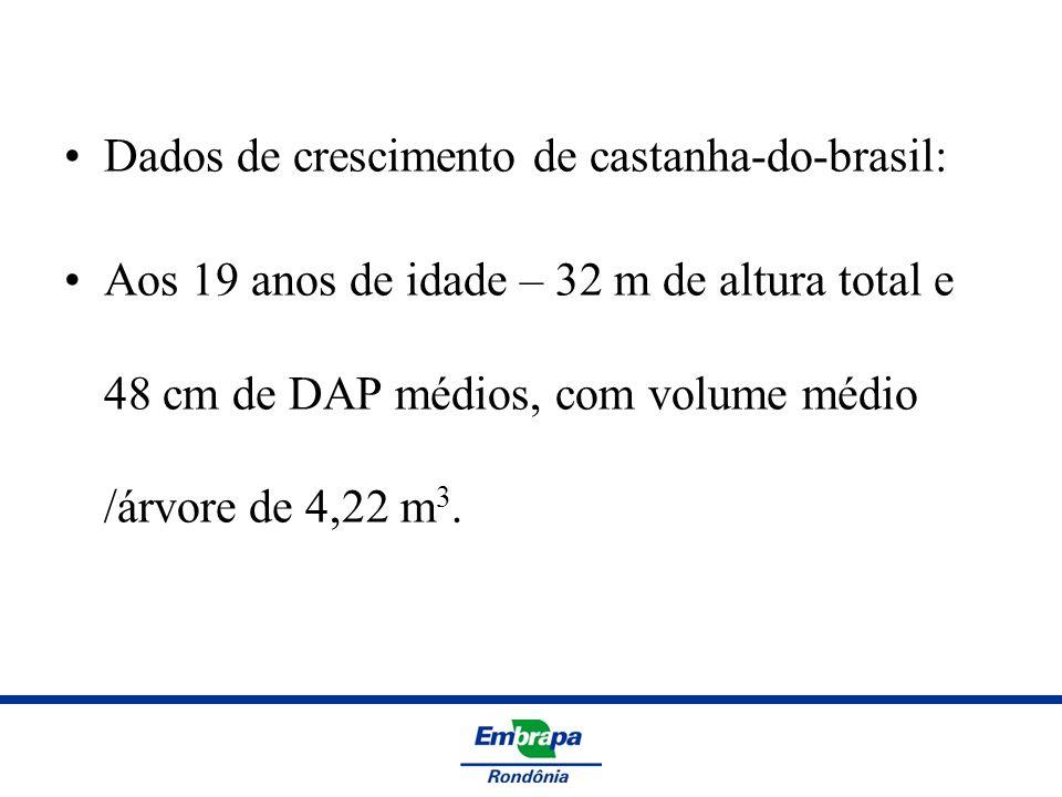 Dados de crescimento de castanha-do-brasil: Aos 19 anos de idade – 32 m de altura total e 48 cm de DAP médios, com volume médio /árvore de 4,22 m 3.