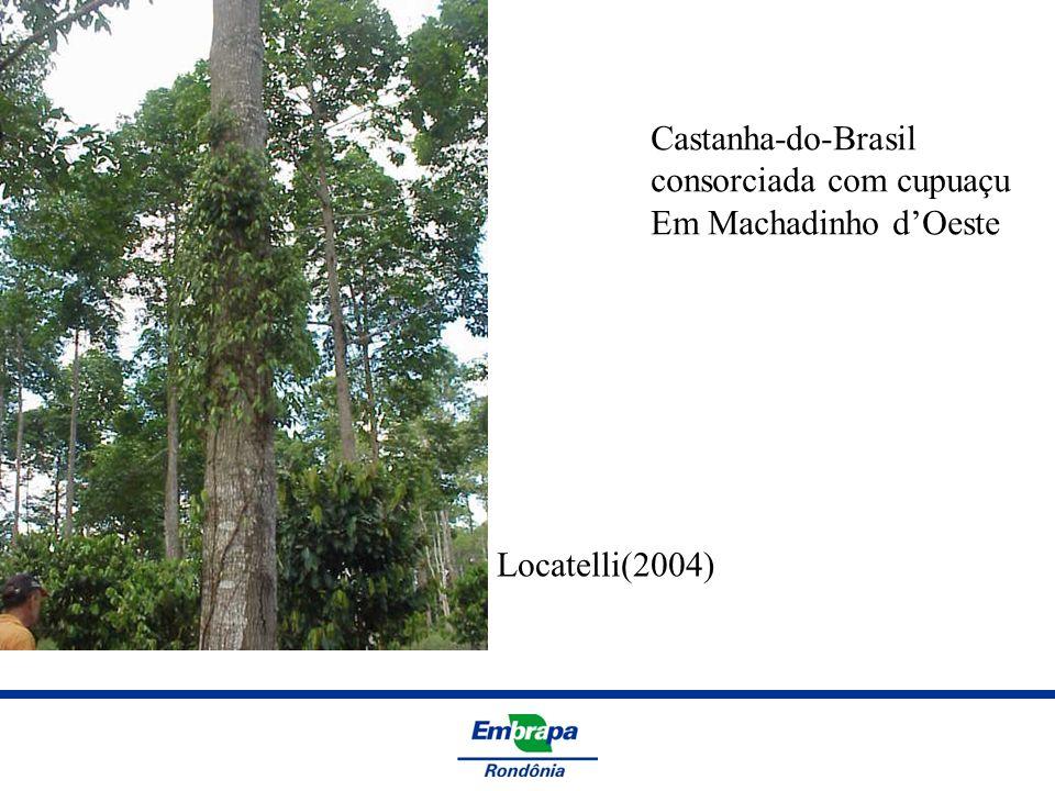 Machadinho dOeste - 2007