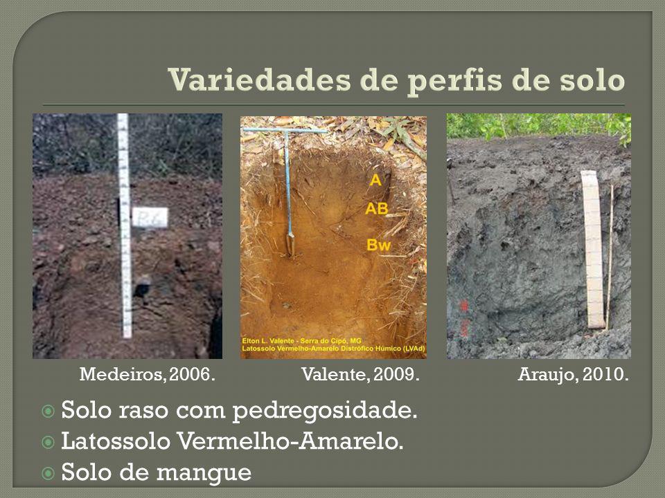 Variedades de perfis de solo Solo raso com pedregosidade.