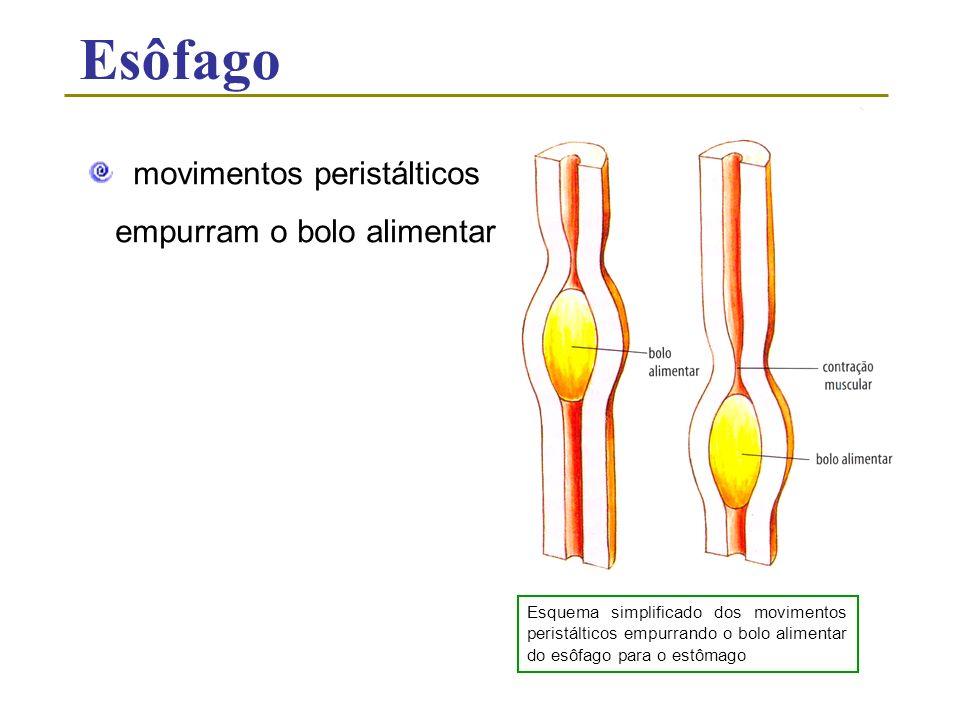 Esôfago movimentos peristálticos empurram o bolo alimentar Esquema simplificado dos movimentos peristálticos empurrando o bolo alimentar do esôfago pa