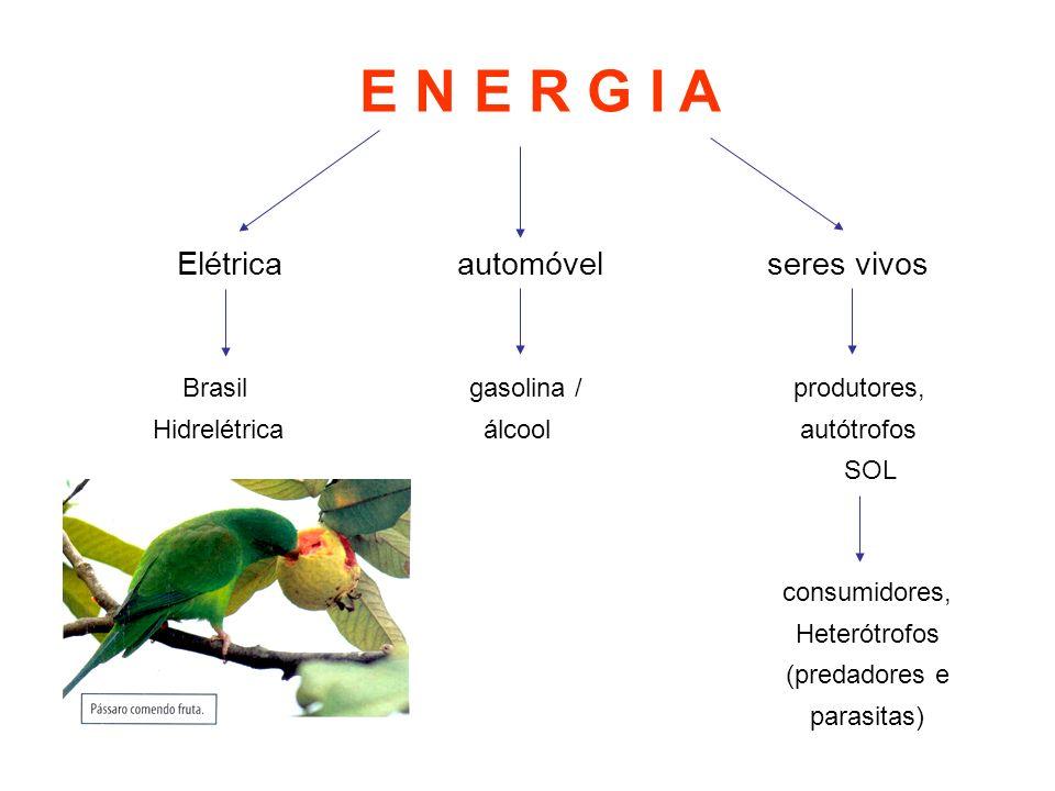 Elétrica automóvel seres vivos Brasil gasolina / produtores, Hidrelétrica álcool autótrofos SOL E N E R G I A consumidores, Heterótrofos (predadores e