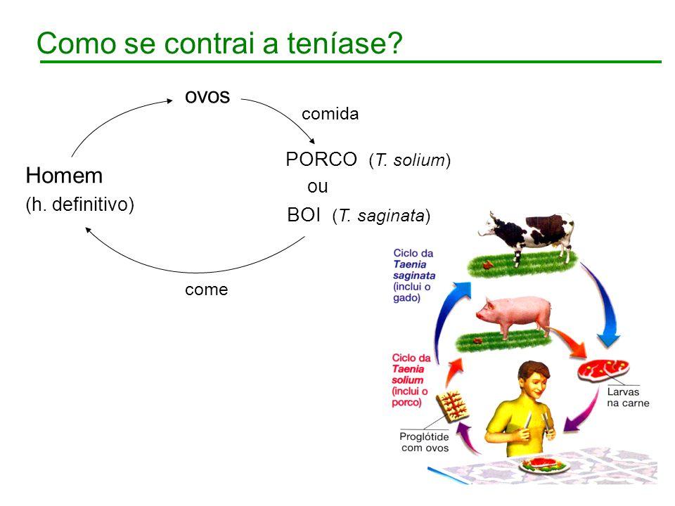 Como se contrai a teníase? ovos comida Homem (h. definitivo) come PORCO (T. solium) BOI (T. saginata) ou