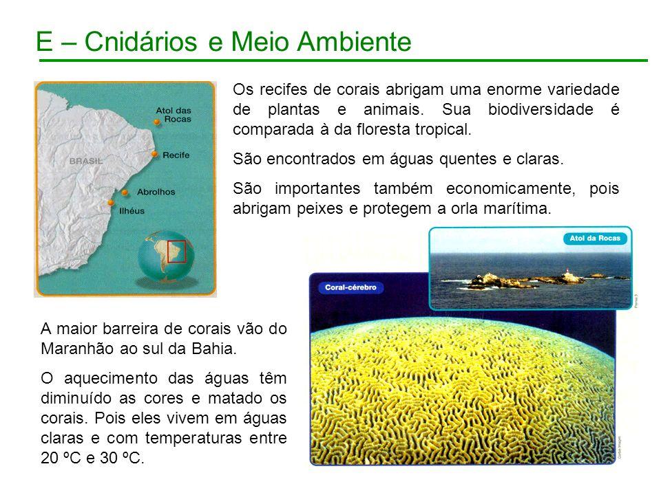 E – Cnidários e Meio Ambiente Os recifes de corais abrigam uma enorme variedade de plantas e animais. Sua biodiversidade é comparada à da floresta tro