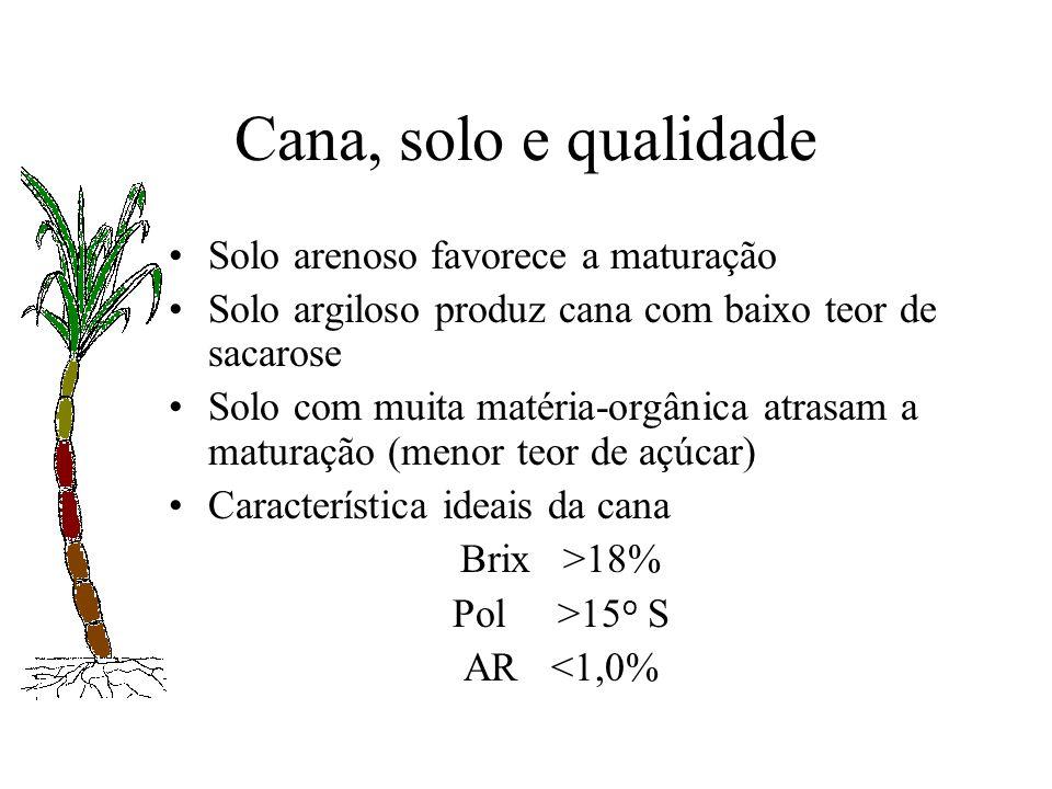 Cana, solo e qualidade Solo arenoso favorece a maturação Solo argiloso produz cana com baixo teor de sacarose Solo com muita matéria-orgânica atrasam