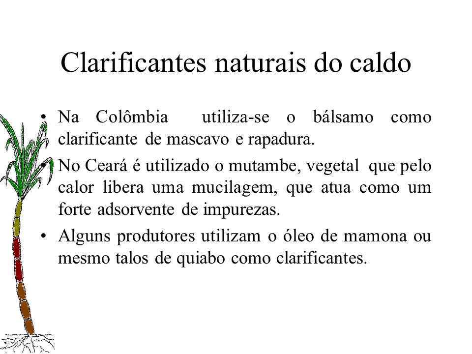 Clarificantes naturais do caldo Na Colômbia utiliza-se o bálsamo como clarificante de mascavo e rapadura. No Ceará é utilizado o mutambe, vegetal que