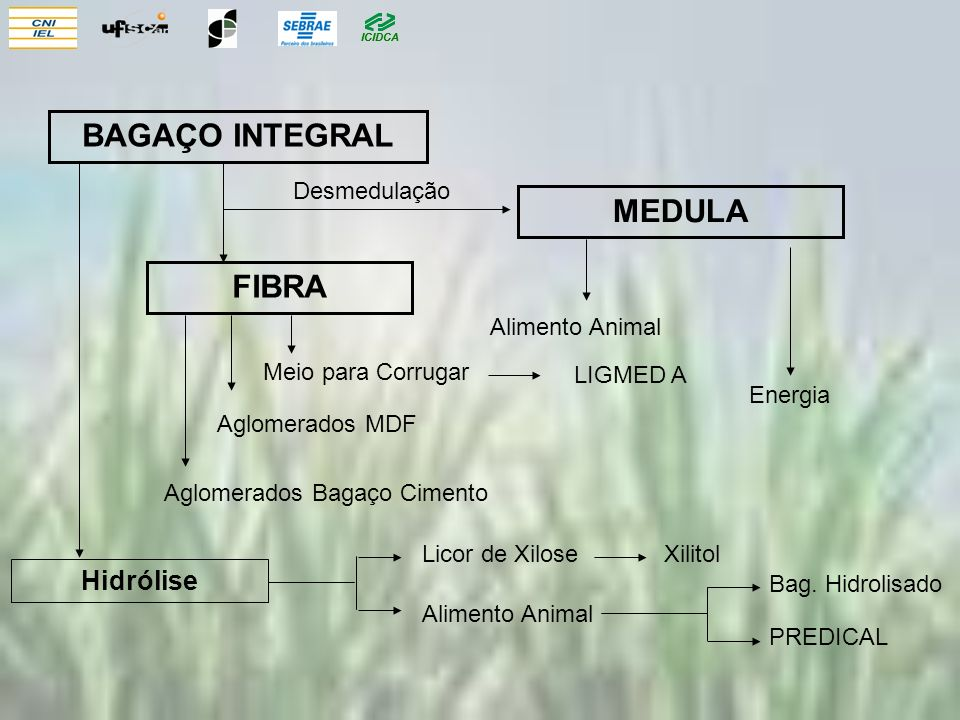 ICIDCA BAGAÇO INTEGRAL FIBRA MEDULA Alimento Animal Energia Aglomerados MDF Aglomerados Bagaço Cimento Hidrólise Licor de Xilose Xilitol Alimento Animal Bag.