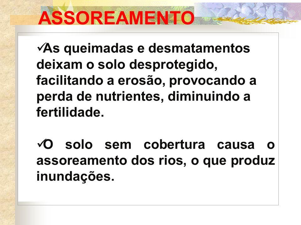ASSOREAMENTO As queimadas e desmatamentos deixam o solo desprotegido, facilitando a erosão, provocando a perda de nutrientes, diminuindo a fertilidade