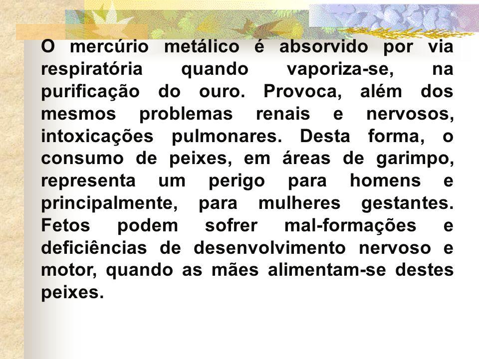 O mercúrio metálico é absorvido por via respiratória quando vaporiza-se, na purificação do ouro. Provoca, além dos mesmos problemas renais e nervosos,
