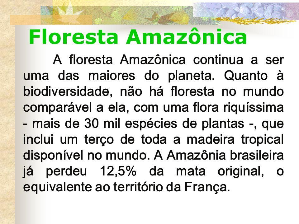 Floresta Amazônica A floresta Amazônica continua a ser uma das maiores do planeta. Quanto à biodiversidade, não há floresta no mundo comparável a ela,