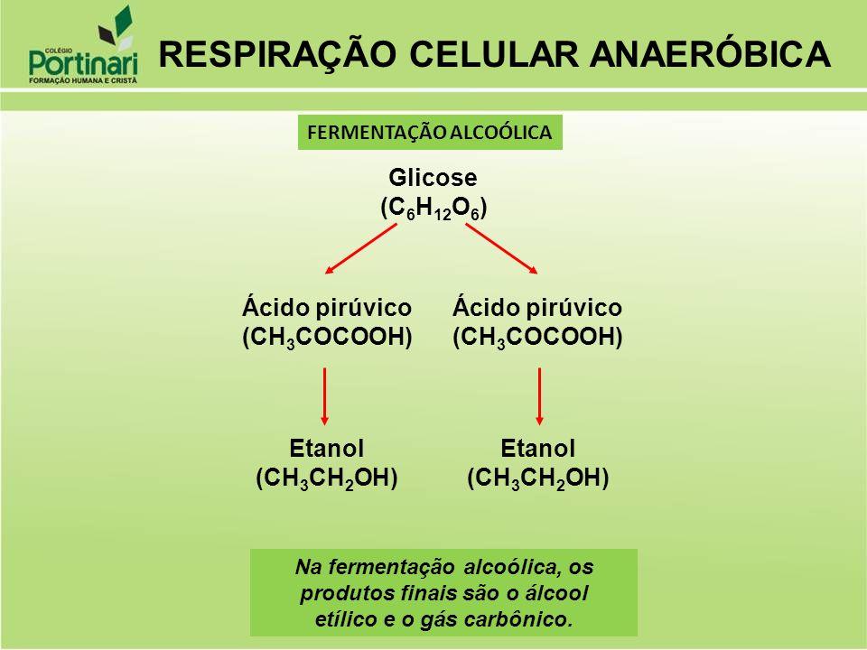 Glicose (C 6 H 12 O 6 ) Ácido pirúvico (CH 3 COCOOH) Ácido pirúvico (CH 3 COCOOH) Etanol (CH 3 CH 2 OH) Etanol (CH 3 CH 2 OH) Na fermentação alcoólica