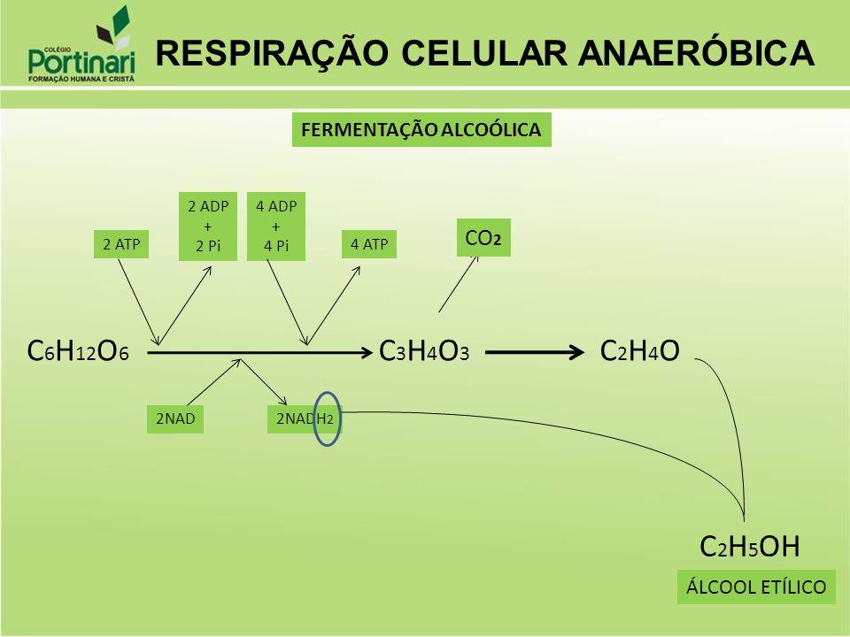 C 6 H 12 O 6 2NADH 2 2NAD 2 ATP 2 ADP + 2 Pi 4 ADP + 4 Pi 4 ATP C3H4O3C3H4O3 CO 2 C2H4OC2H4O C 2 H 5 OH ÁLCOOL ETÍLICO FERMENTAÇÃO ALCOÓLICA RESPIRAÇÃ