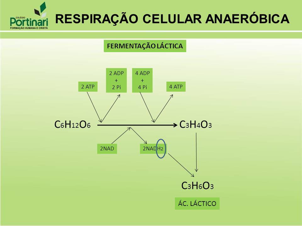 C 6 H 12 O 6 2NADH 2 2NAD 2 ATP 2 ADP + 2 Pi 4 ADP + 4 Pi 4 ATP C3H4O3C3H4O3 C3H6O3C3H6O3 ÁC. LÁCTICO RESPIRAÇÃO CELULAR ANAERÓBICA FERMENTAÇÃO LÁCTIC