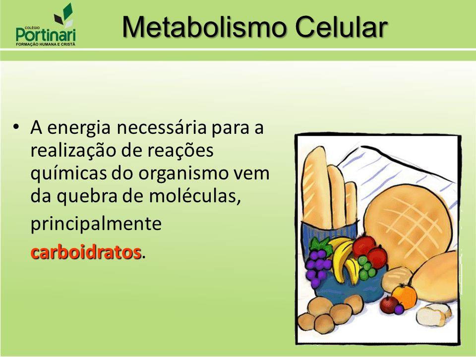 A energia necessária para a realização de reações químicas do organismo vem da quebra de moléculas, principalmente carboidratos carboidratos. Metaboli