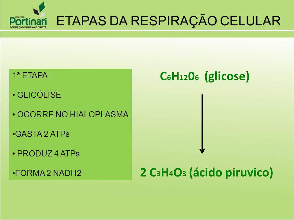 C 6 H 12 0 6 (glicose) 2 C 3 H 4 O 3 (ácido piruvico) ETAPAS DA RESPIRAÇÃO CELULAR 1ª ETAPA: GLICÓLISE OCORRE NO HIALOPLASMA GASTA 2 ATPs PRODUZ 4 ATP