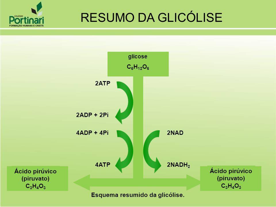 glicose C 6 H 12 O 6 2ATP 2ADP + 2Pi 4ADP + 4Pi 4ATP 2NAD 2NADH 2 Ácido pirúvico (piruvato) C 3 H 4 O 3 Ácido pirúvico (piruvato) C 3 H 4 O 3 Esquema