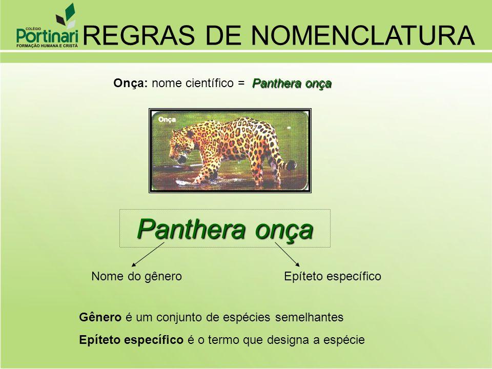 Panthera onça Onça: nome científico = Panthera onça Panthera onça Nome do gêneroEpíteto específico Gênero é um conjunto de espécies semelhantes Epíteto específico é o termo que designa a espécie REGRAS DE NOMENCLATURA