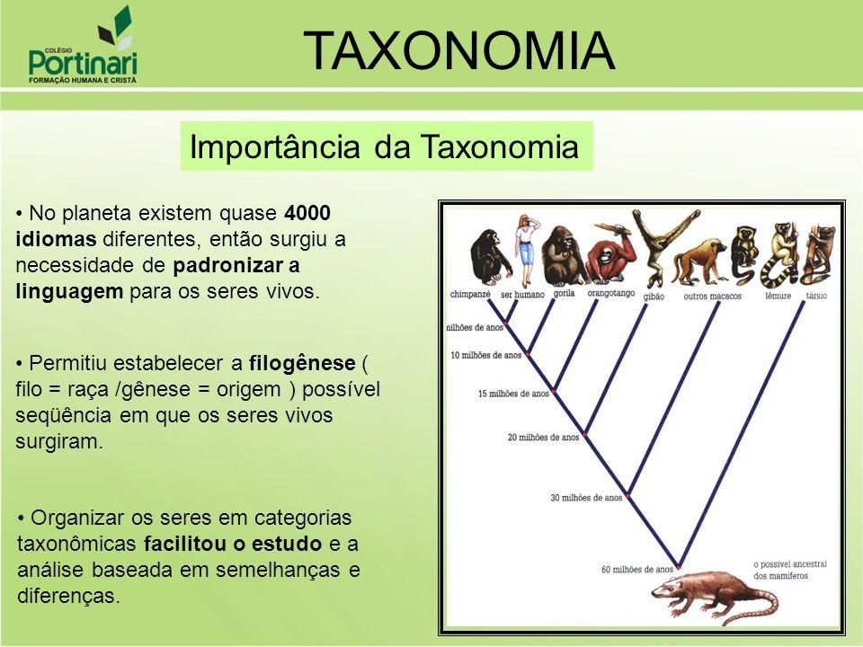 Permitiu estabelecer a filogênese ( filo = raça /gênese = origem ) possível seqüência em que os seres vivos surgiram. Organizar os seres em categorias