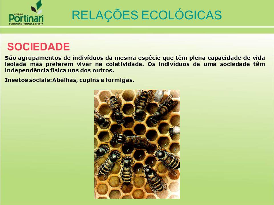 RELAÇÕES ECOLÓGICAS HARMÔNICAS (não ocorre prejuízo para os envolvidos ) INTER-ESPECÍFICAS (ocorrem entre indivíduos de espécies diferentes, dentro das comunidades) COOPERAÇÃO (+ / +) (benefícios mútuos onde a associação não é obrigatória) ex: crocodilo-pássaro palito, anu-gado MUTUALISMO (+ / +) (benefícios mútuos onde a associação é obrigatória entre os indivíduos) ex: líquens, ruminantes e bactérias INQUILINISMO (+ / 0) (organismo que mora no corpo de outro sem lhe causar qualquer prejuízo) ex: epifitismo(orquídeas e bromélias) COMENSALISMO (+ / 0) (organismo se alimenta de restos alimentares de outro) ex: hiena e leão, tubarão e rêmora RELAÇÕES ECOLÓGICAS