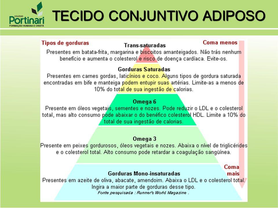 Panículo adiposo: O panículo adiposo é uma camada mais interna que, nas pessoas gordas, se encontra mais desenvolvida.