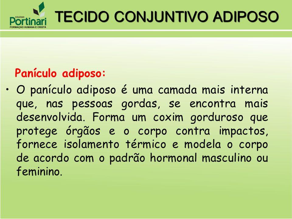 Panículo adiposo: O panículo adiposo é uma camada mais interna que, nas pessoas gordas, se encontra mais desenvolvida. Forma um coxim gorduroso que pr