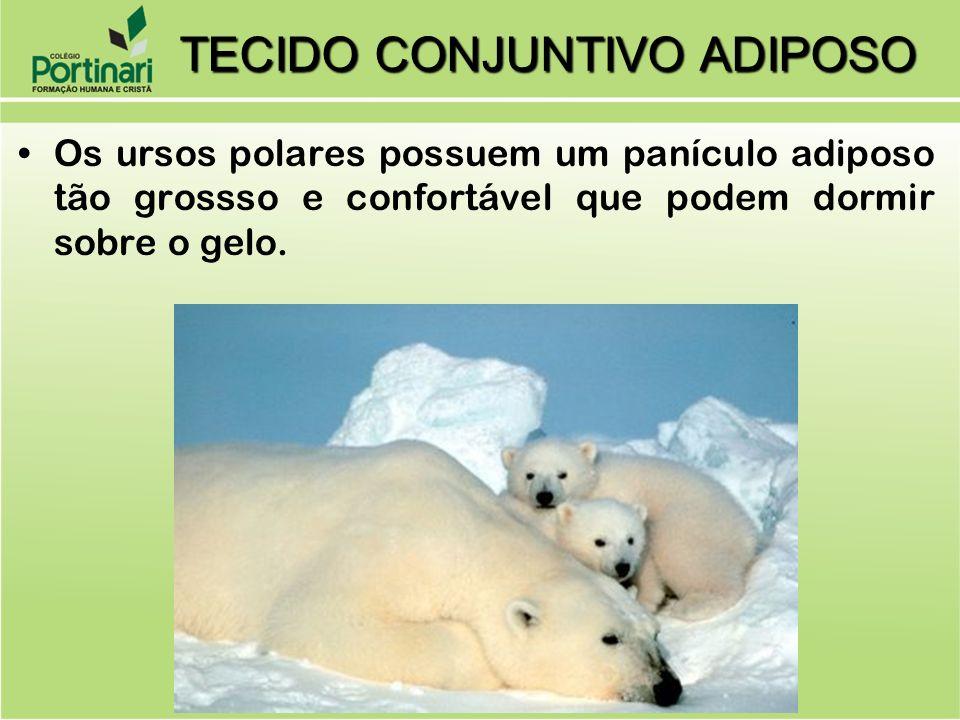 Os ursos polares possuem um panículo adiposo tão grossso e confortável que podem dormir sobre o gelo. TECIDO CONJUNTIVO ADIPOSO