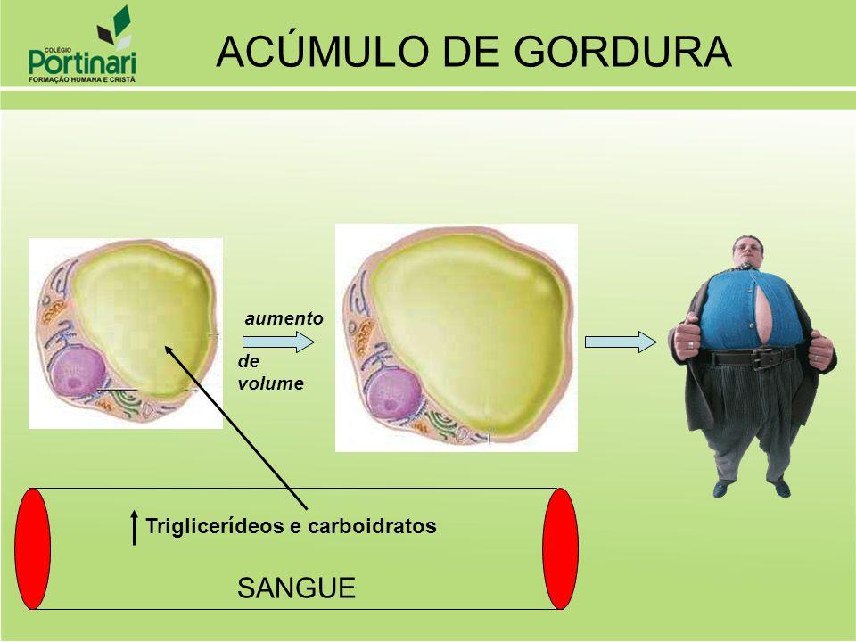 SANGUE Triglicerídeos e carboidratos aumento de volume ACÚMULO DE GORDURA