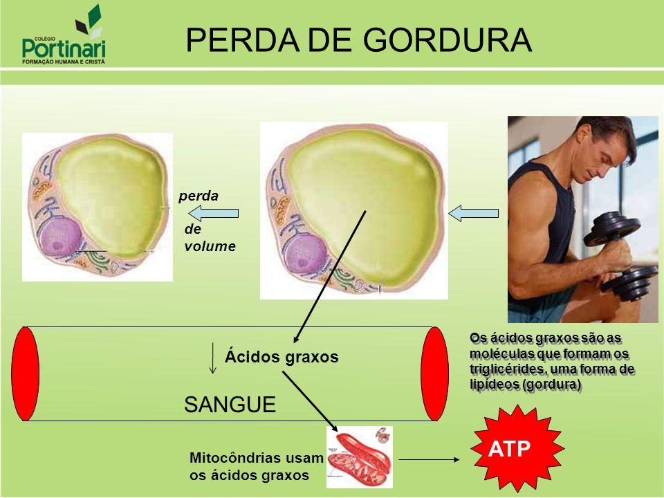 SANGUE Ácidos graxos perda de volume PERDA DE GORDURA Mitocôndrias usam os ácidos graxos ATP Os ácidos graxos são as moléculas que formam os triglicér