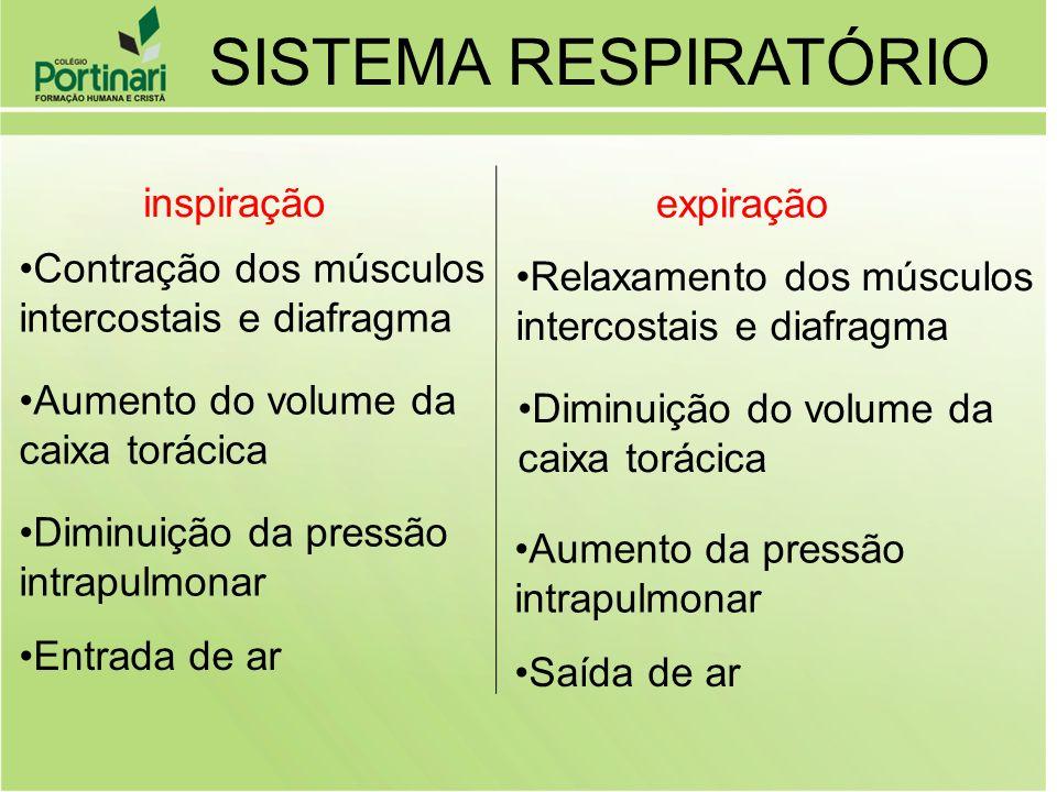 inspiração expiração Contração dos músculos intercostais e diafragma Aumento do volume da caixa torácica Diminuição da pressão intrapulmonar Entrada d