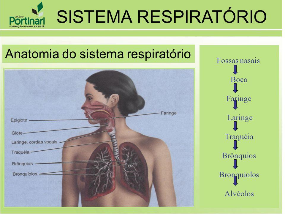 Fossas nasais Boca Faringe Laringe Traquéia Brônquios Bronquíolos Alvéolos SISTEMA RESPIRATÓRIO Anatomia do sistema respiratório