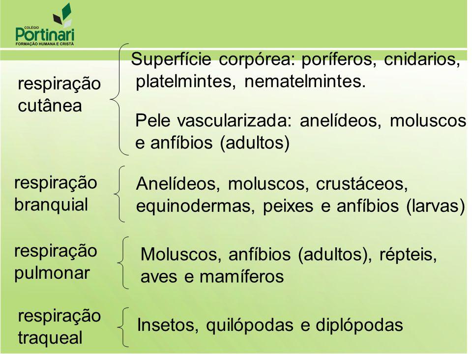 respiração cutânea Superfície corpórea: poríferos, cnidarios, platelmintes, nematelmintes. Pele vascularizada: anelídeos, moluscos e anfíbios (adultos