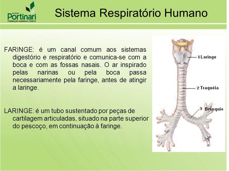 FARINGE: é um canal comum aos sistemas digestório e respiratório e comunica-se com a boca e com as fossas nasais. O ar inspirado pelas narinas ou pela