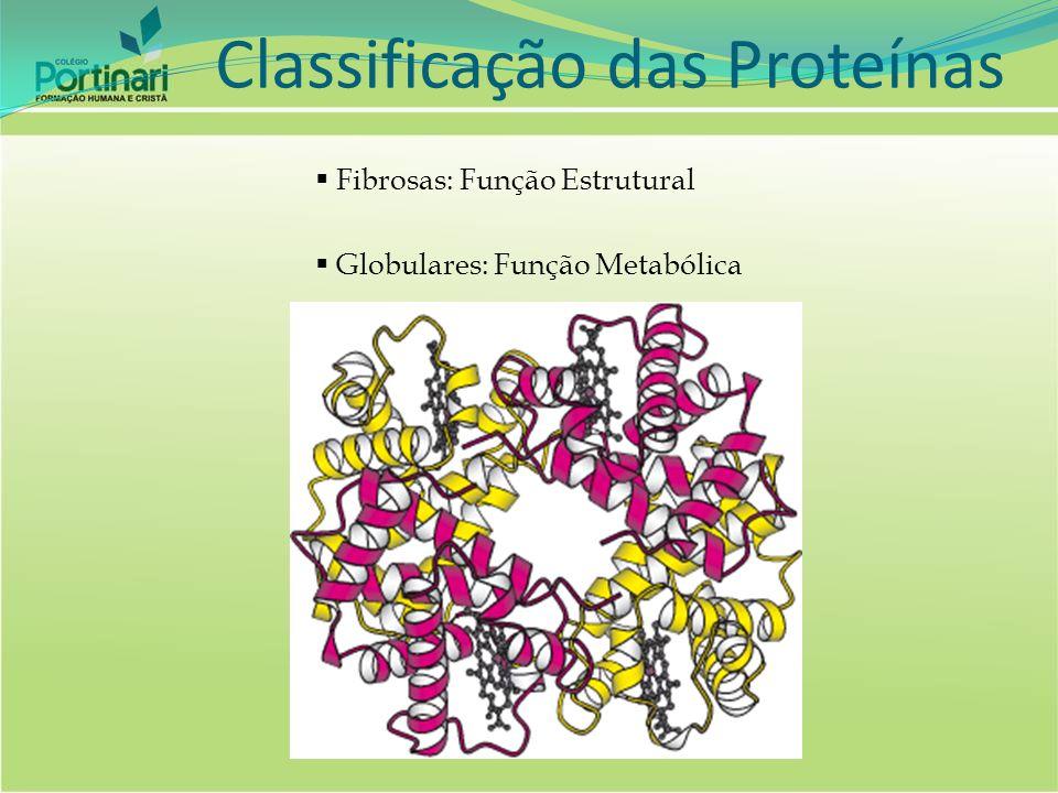 Morfologia celular Catalisadores das reações químicas (enzimas) Controle da permeabilidade celular Regulação a concentração de metabólitos Controle da expressão gênica Funções das proteínas