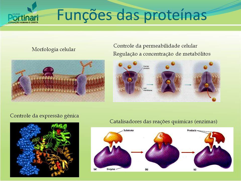 Exemplos: AMIDO: AMILASE LACTOSE: LACTASE MALTOSE: MALTASE Modelo: Chave x fechadura Especificidade enzimática