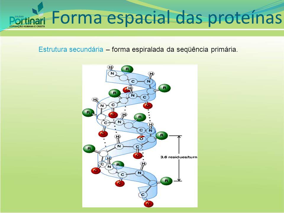 Estrutura terciária- forma globosa da estrutura secundária (nó), resultado de novas ligações peptídicas.