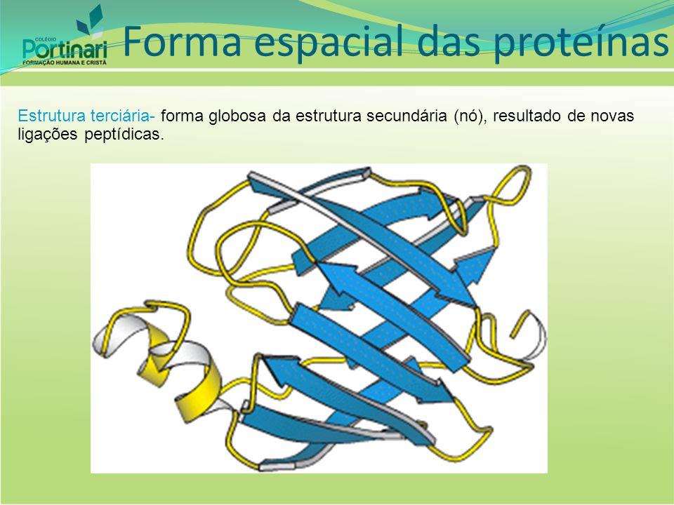 Estrutura quaternária- mistura de várias estruturas terciárias. Forma espacial das proteínas