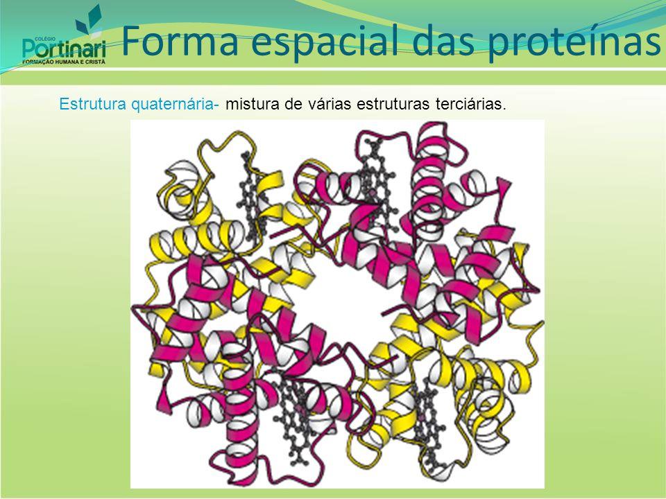 Fatores que interferem na atividade enzimática EstômagoBocaIntestino ÁcidoNeutroBásico PepsinaPtialinaTripsina Digere Proteínas Digere Amido Digere Proteínas