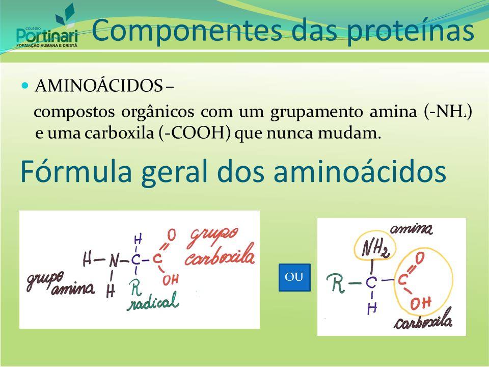Como diferenciar aminoácidos O que difere um aminoácido de outro é o radical, que pode ser um único hidrogênio ou uma cadeia de carbonos.