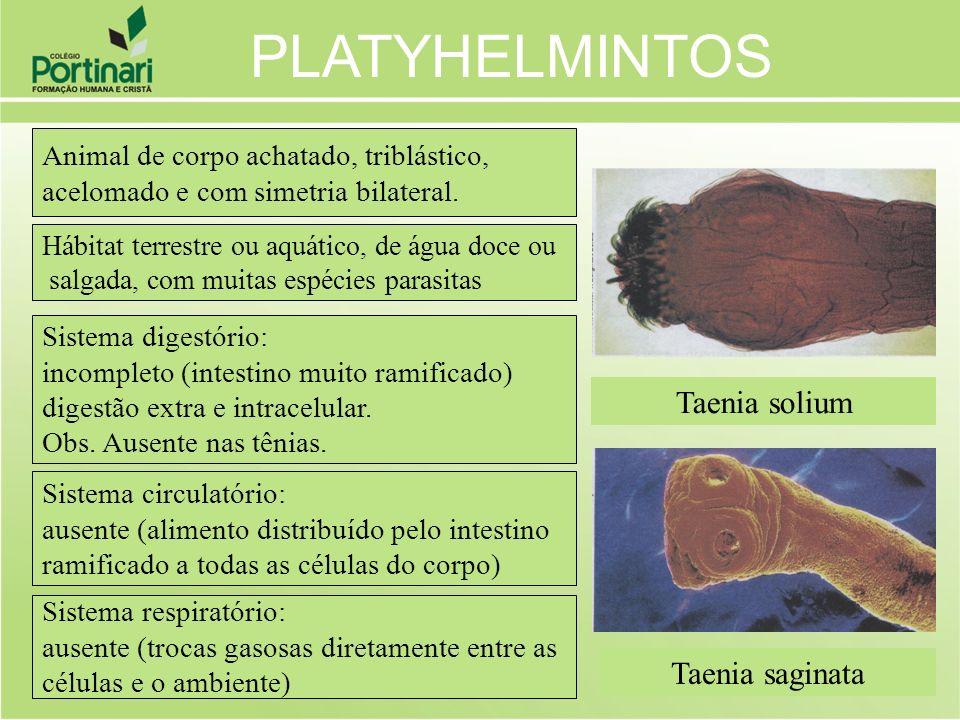 Taenia solium Taenia saginata Animal de corpo achatado, triblástico, acelomado e com simetria bilateral. Sistema digestório: incompleto (intestino mui