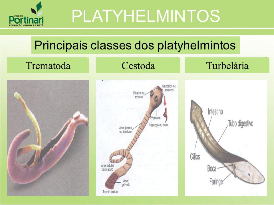 TurbeláriaCestodaTrematoda PLATYHELMINTOS Principais classes dos platyhelmintos